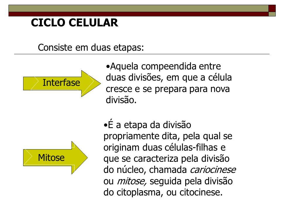 CICLO CELULAR Consiste em duas etapas: