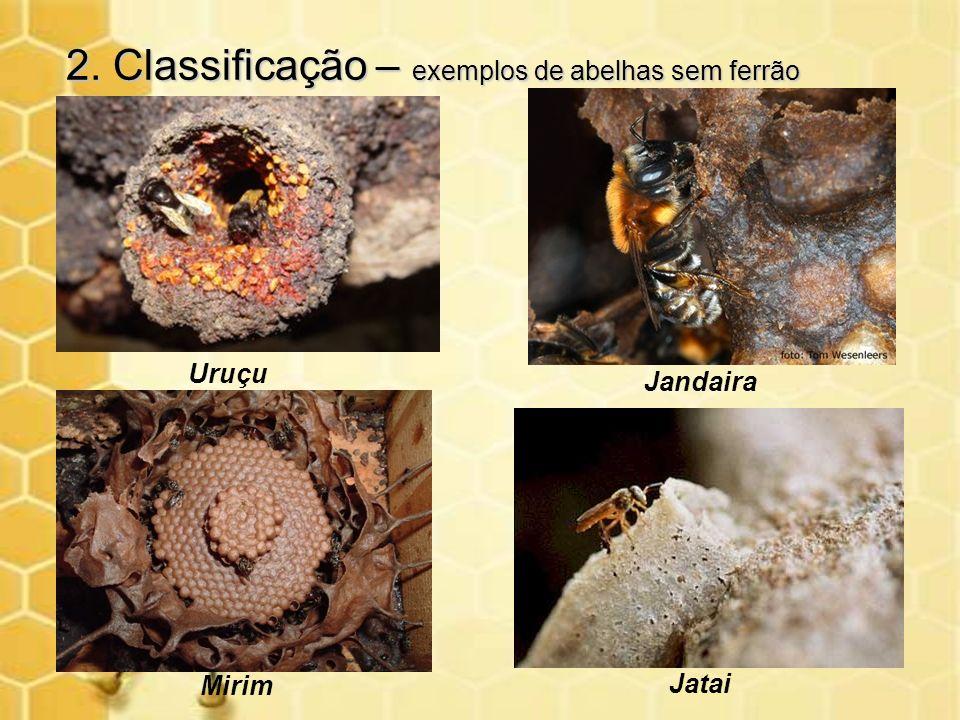 2. Classificação – exemplos de abelhas sem ferrão
