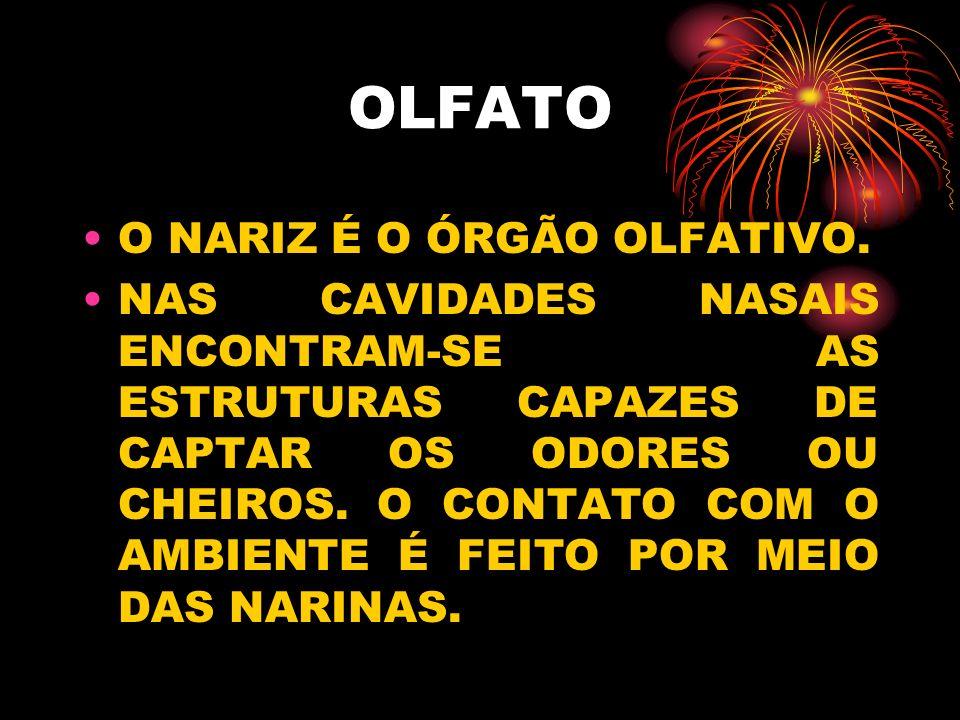 OLFATO O NARIZ É O ÓRGÃO OLFATIVO.