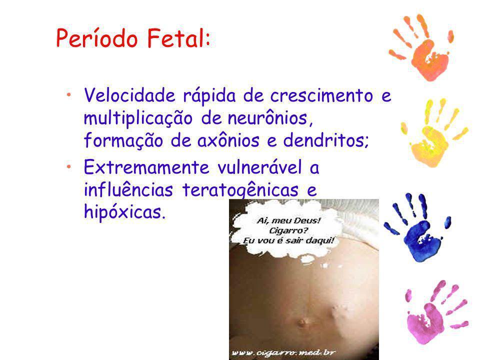 Período Fetal: Velocidade rápida de crescimento e multiplicação de neurônios, formação de axônios e dendritos;