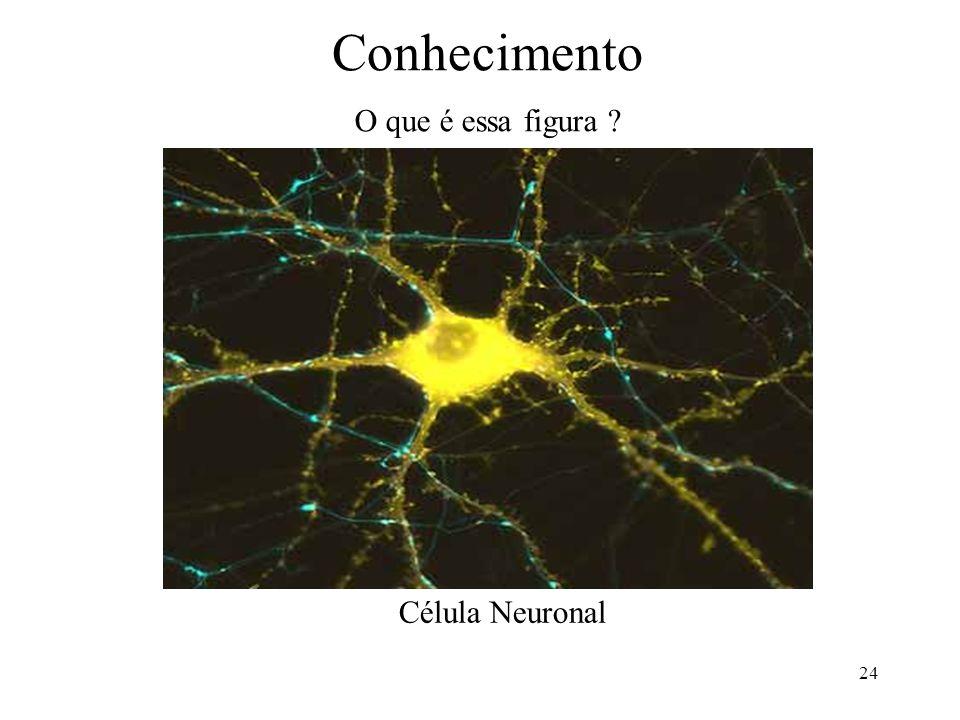 Conhecimento O que é essa figura Célula Neuronal