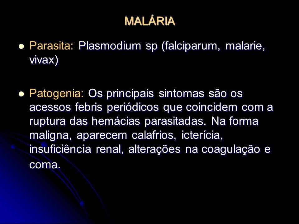 MALÁRIA Parasita: Plasmodium sp (falciparum, malarie, vivax)