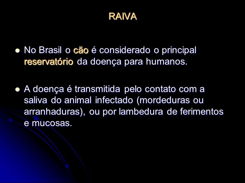 RAIVA No Brasil o cão é considerado o principal reservatório da doença para humanos.