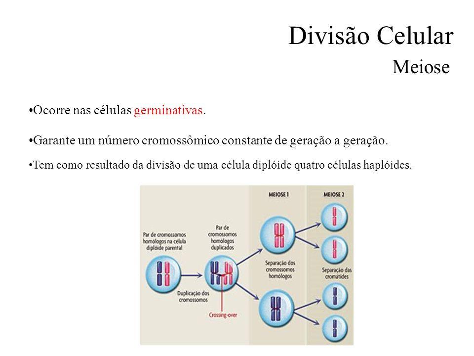 Divisão Celular Meiose Ocorre nas células germinativas.