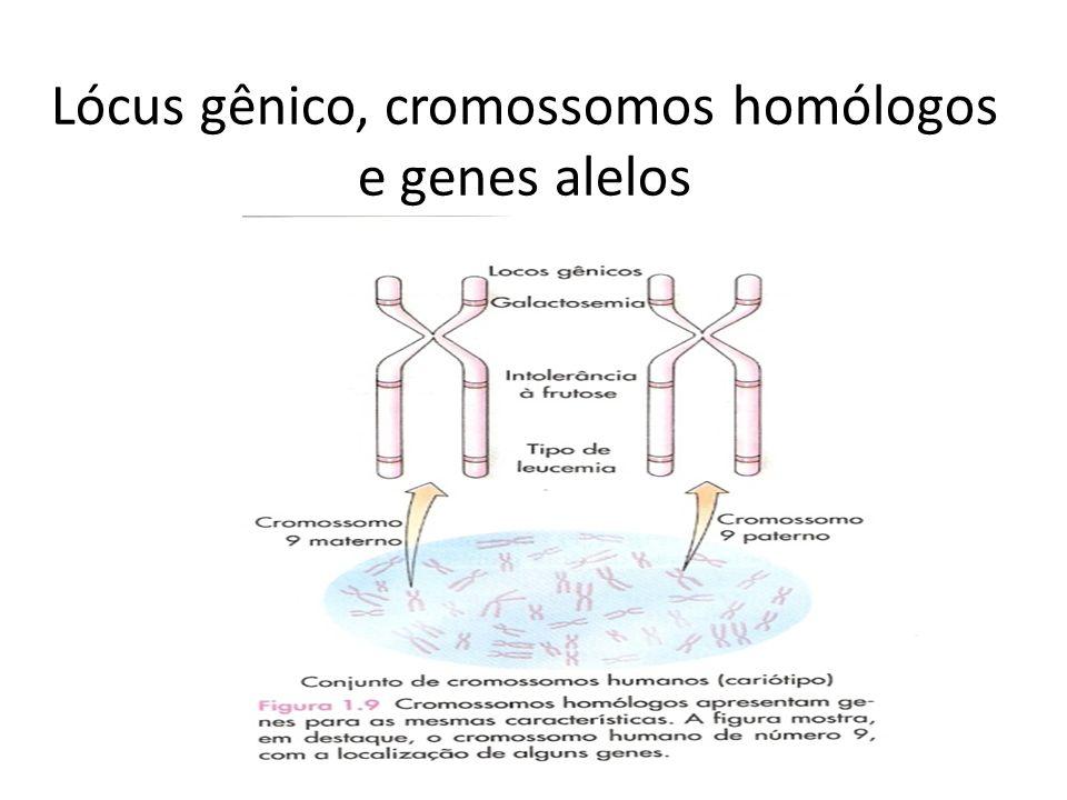 Lócus gênico, cromossomos homólogos e genes alelos