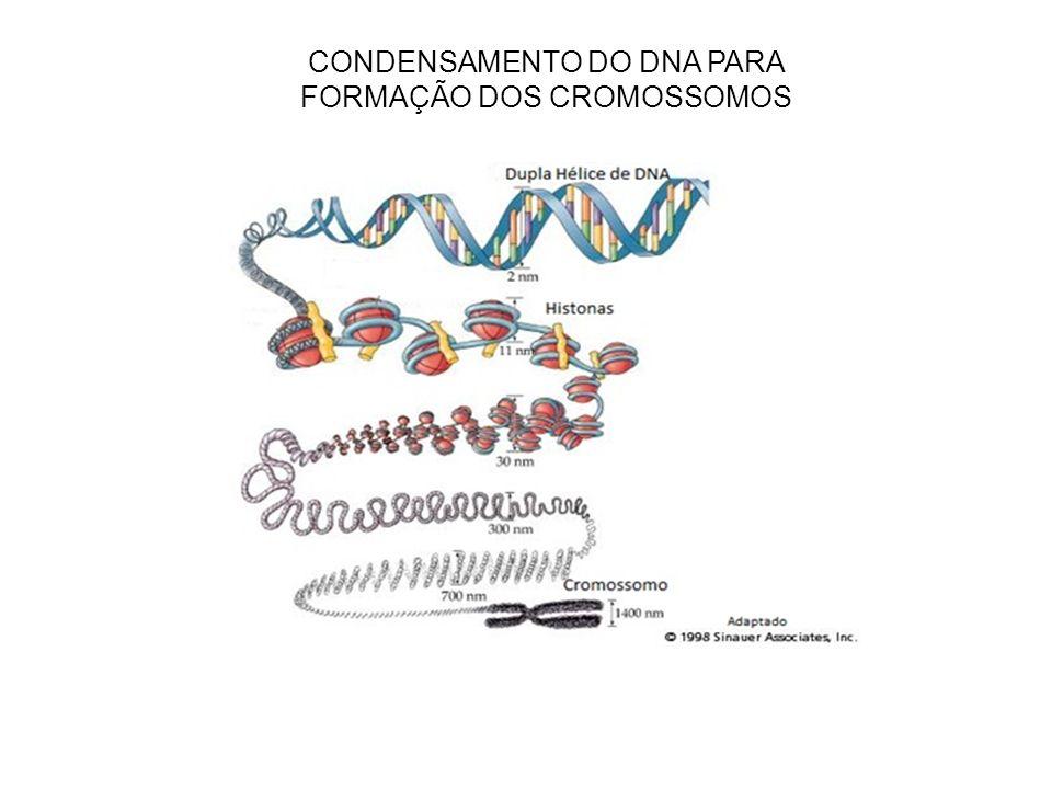CONDENSAMENTO DO DNA PARA FORMAÇÃO DOS CROMOSSOMOS
