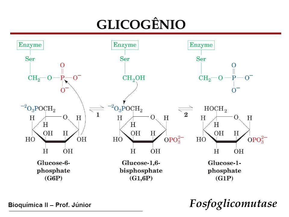 GLICOGÊNIO Fosfoglicomutase