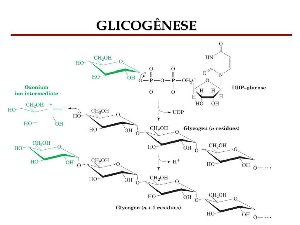 GLICOGÊNESE