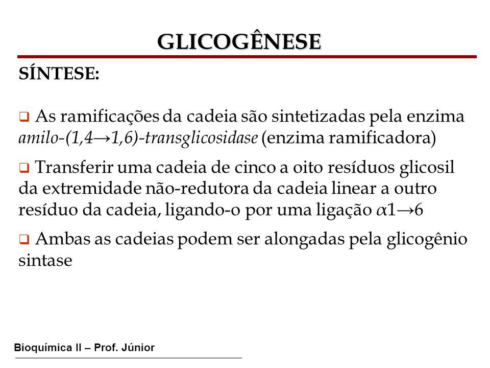 GLICOGÊNESE SÍNTESE: As ramificações da cadeia são sintetizadas pela enzima. amilo-(1,4→1,6)-transglicosidase (enzima ramificadora)