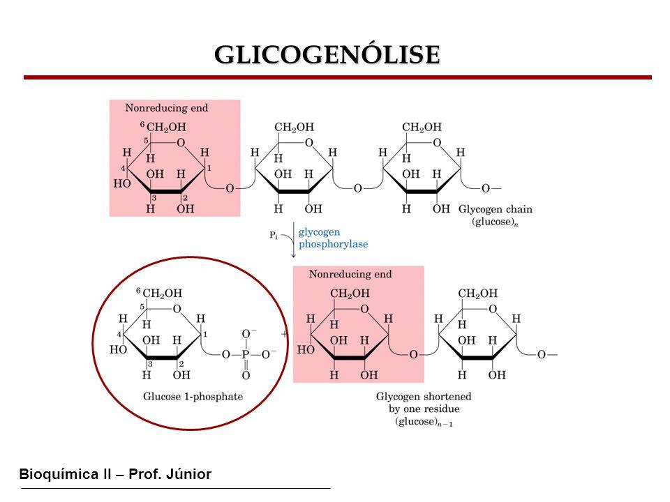 GLICOGENÓLISE