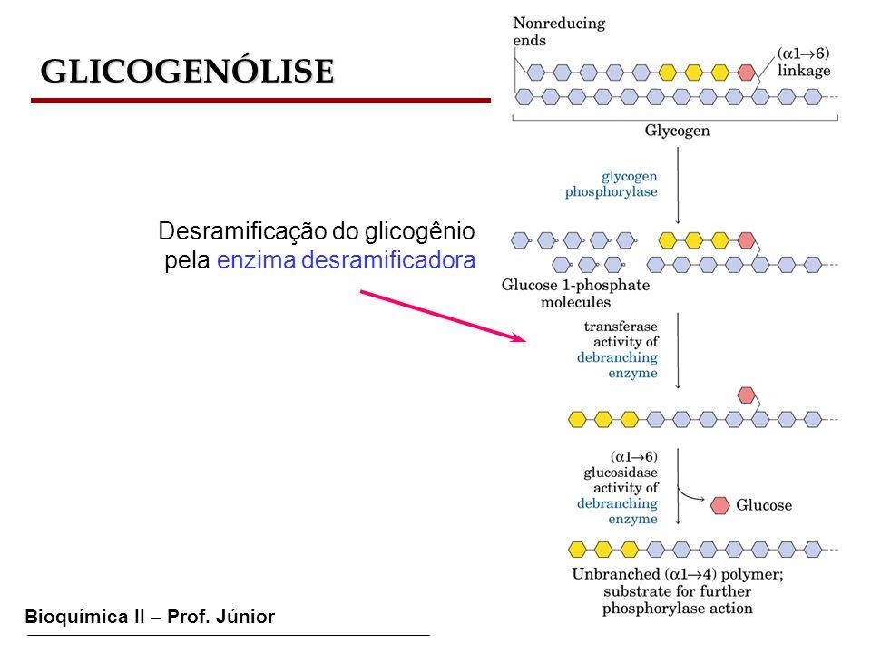 GLICOGENÓLISE Desramificação do glicogênio pela enzima desramificadora