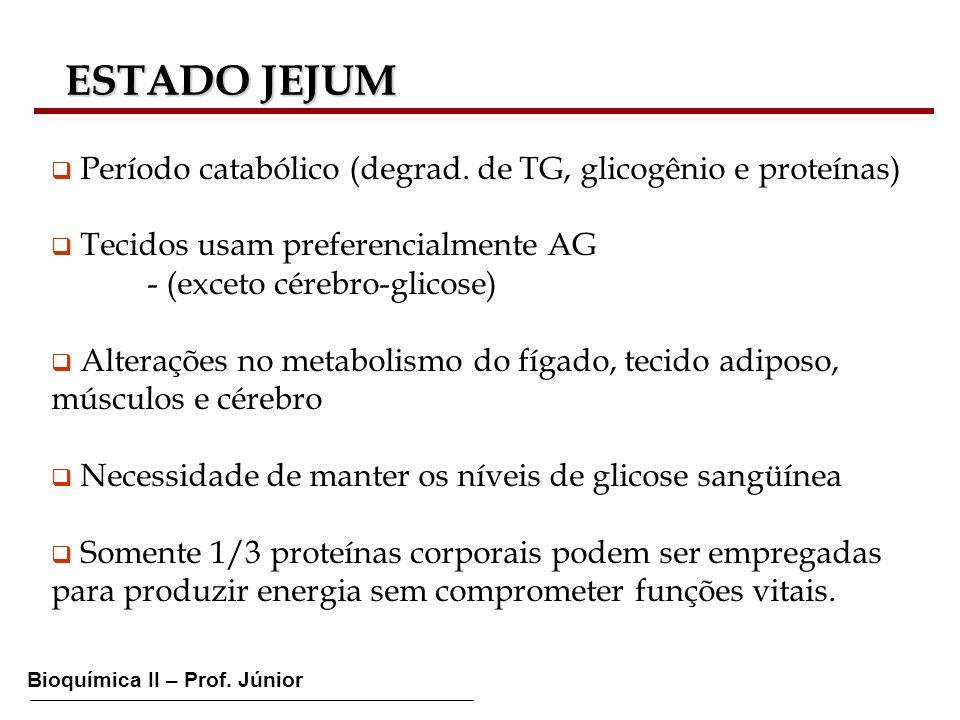 ESTADO JEJUM Período catabólico (degrad. de TG, glicogênio e proteínas) Tecidos usam preferencialmente AG.