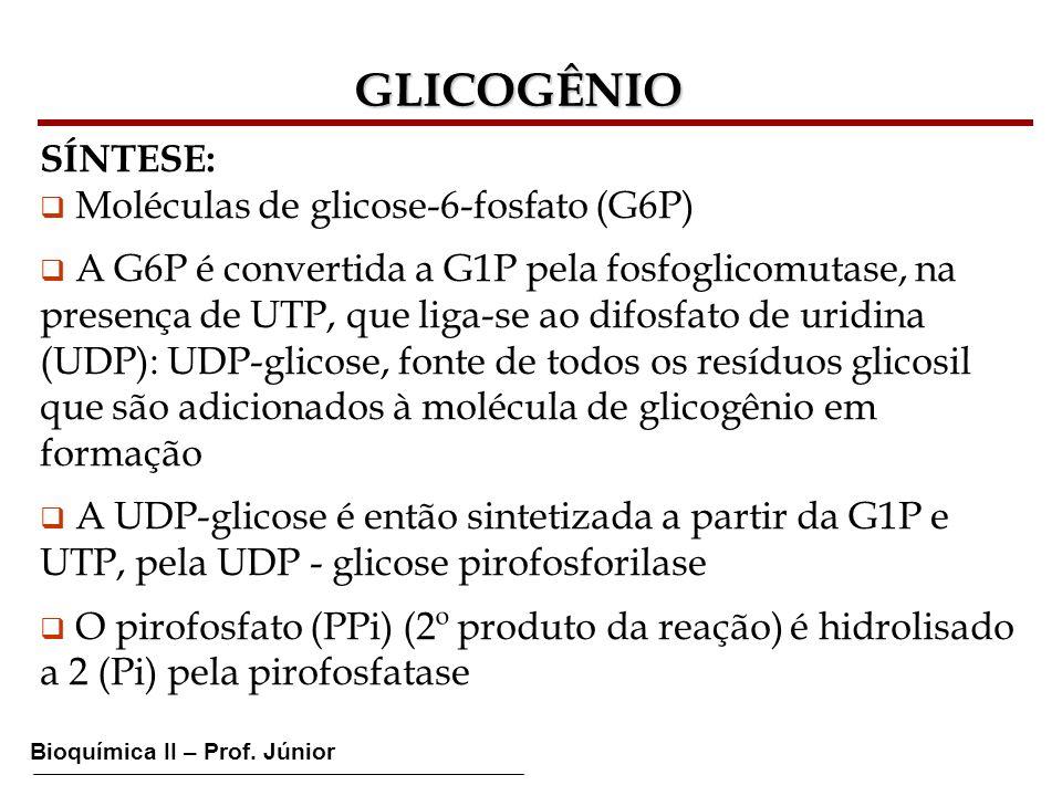 GLICOGÊNIO SÍNTESE: Moléculas de glicose-6-fosfato (G6P)