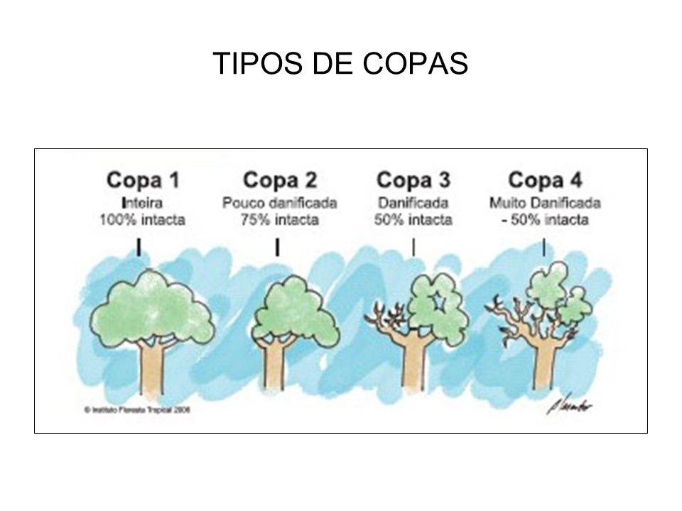 TIPOS DE COPAS