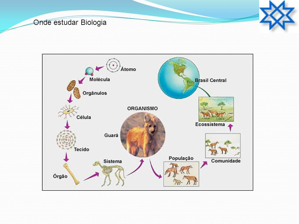 Onde estudar Biologia