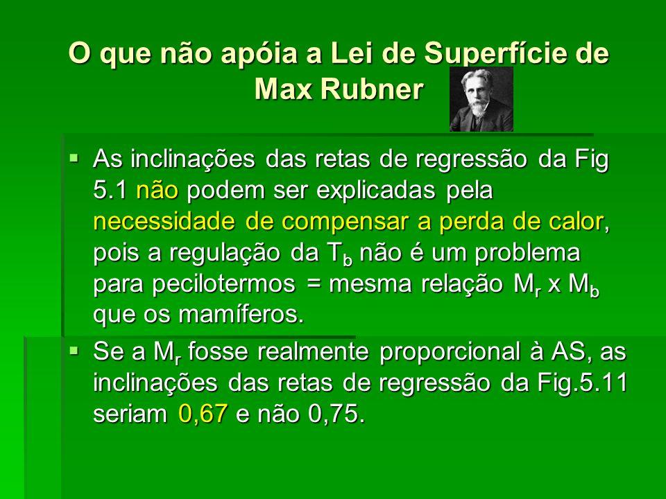 O que não apóia a Lei de Superfície de Max Rubner