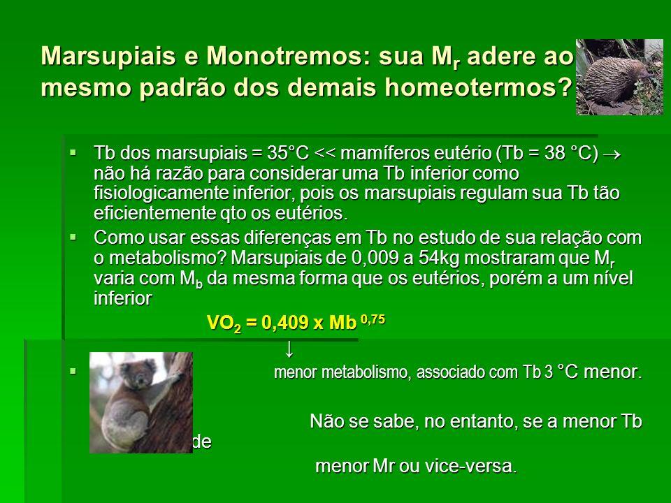 Marsupiais e Monotremos: sua Mr adere ao mesmo padrão dos demais homeotermos