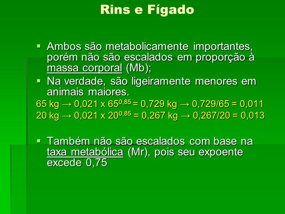 Rins e Fígado Ambos são metabolicamente importantes, porém não são escalados em proporção à massa corporal (Mb);