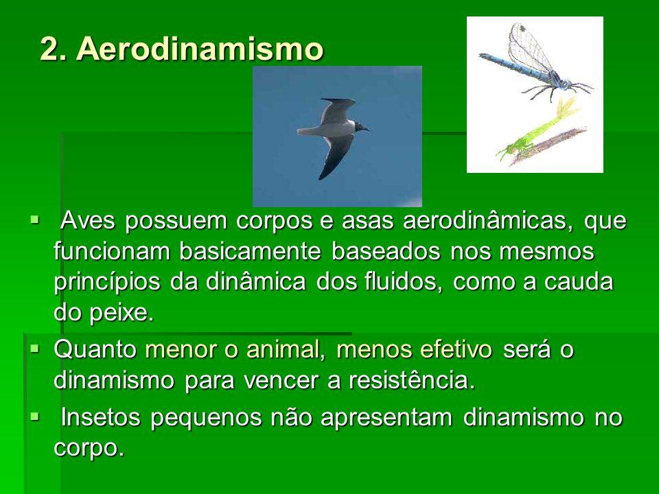 2. Aerodinamismo