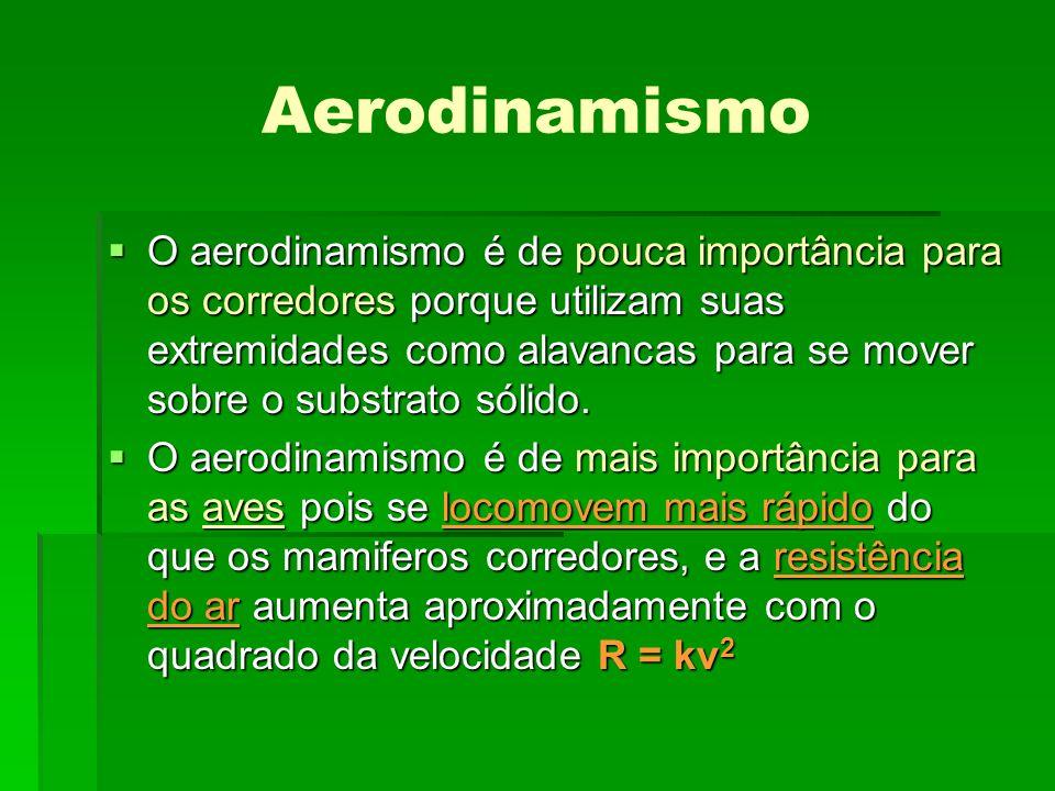 Aerodinamismo