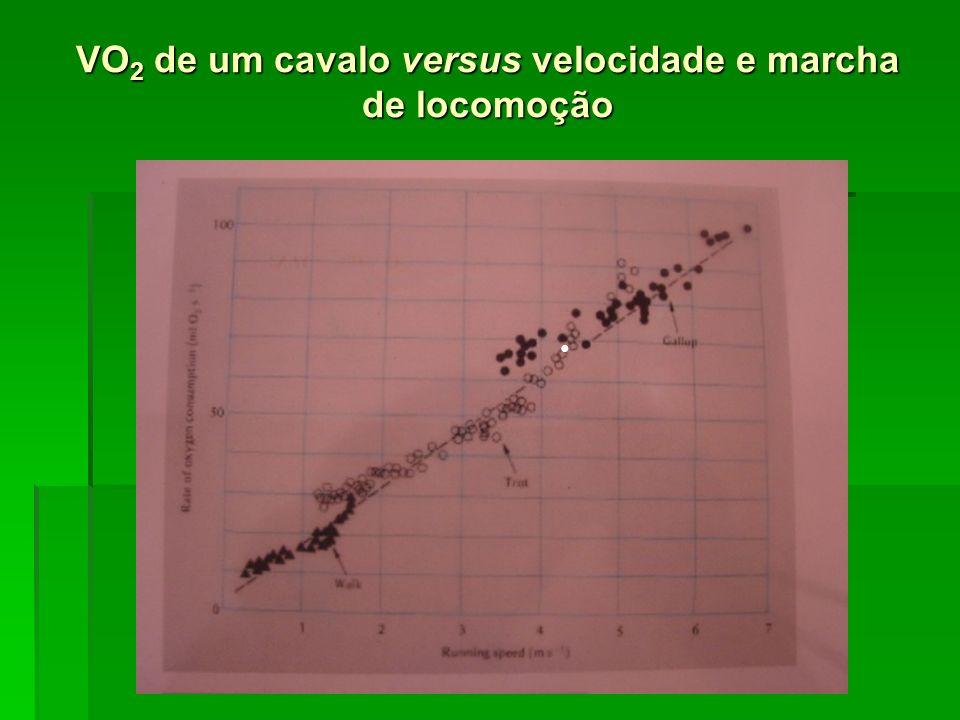 VO2 de um cavalo versus velocidade e marcha de locomoção