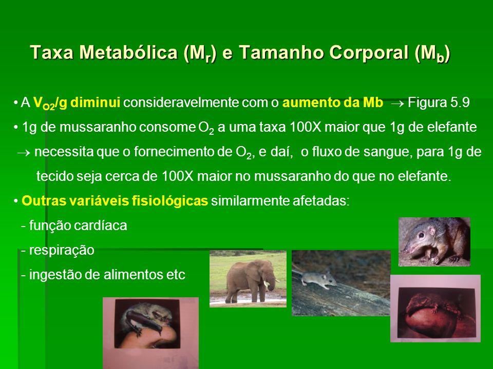 Taxa Metabólica (Mr) e Tamanho Corporal (Mb)