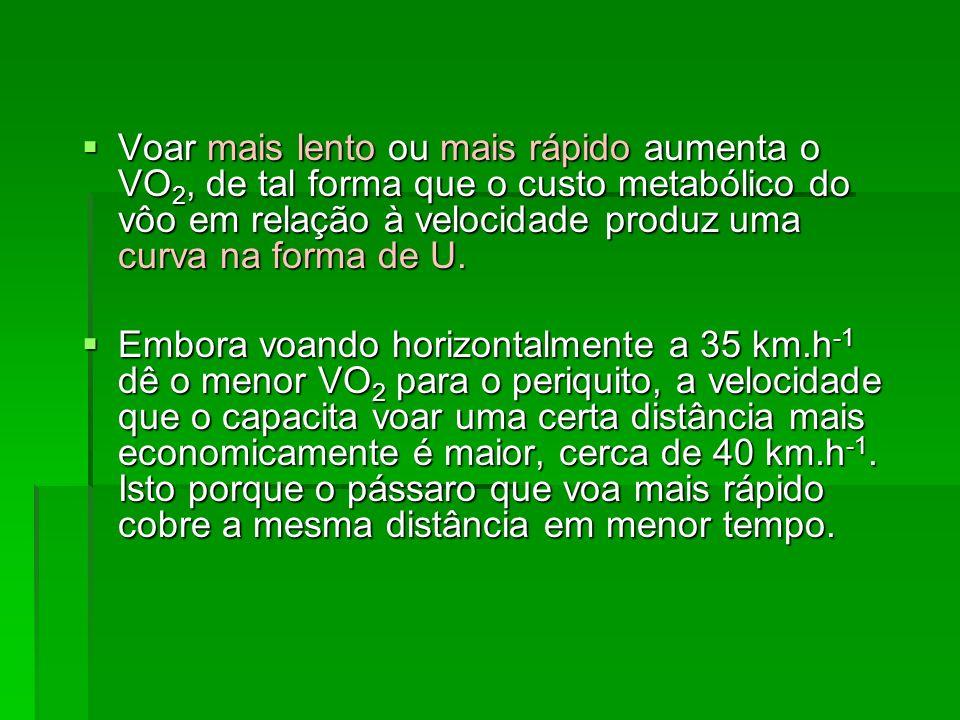 Voar mais lento ou mais rápido aumenta o VO2, de tal forma que o custo metabólico do vôo em relação à velocidade produz uma curva na forma de U.