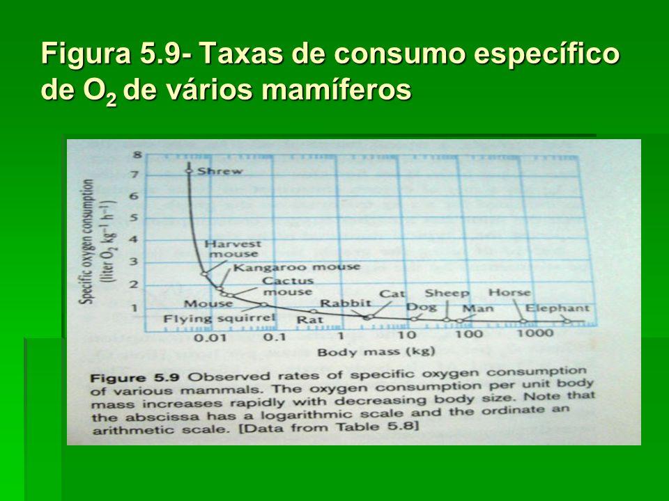 Figura 5.9- Taxas de consumo específico de O2 de vários mamíferos