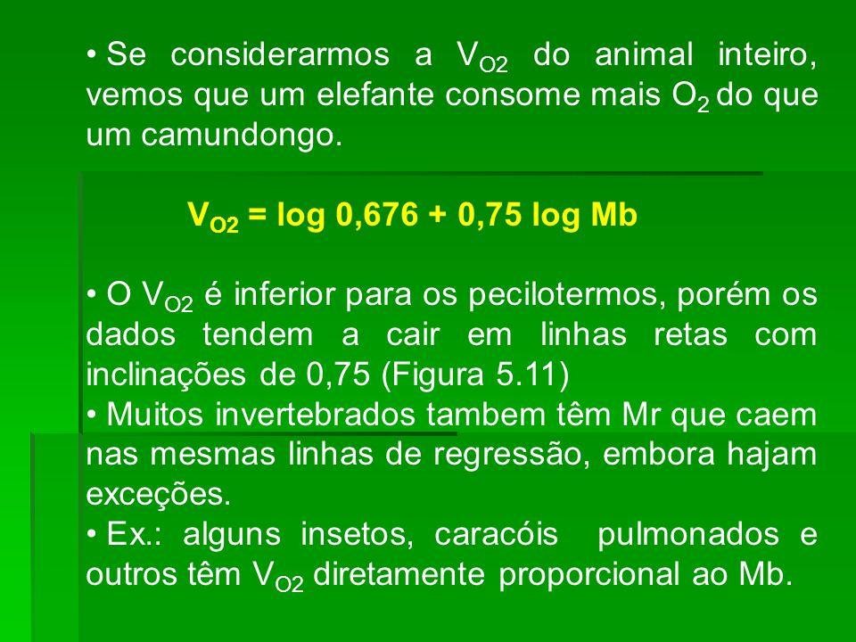 Se considerarmos a VO2 do animal inteiro, vemos que um elefante consome mais O2 do que um camundongo.