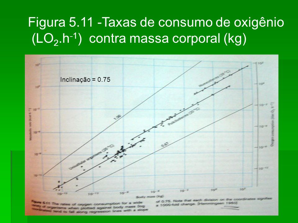 Figura 5.11 -Taxas de consumo de oxigênio