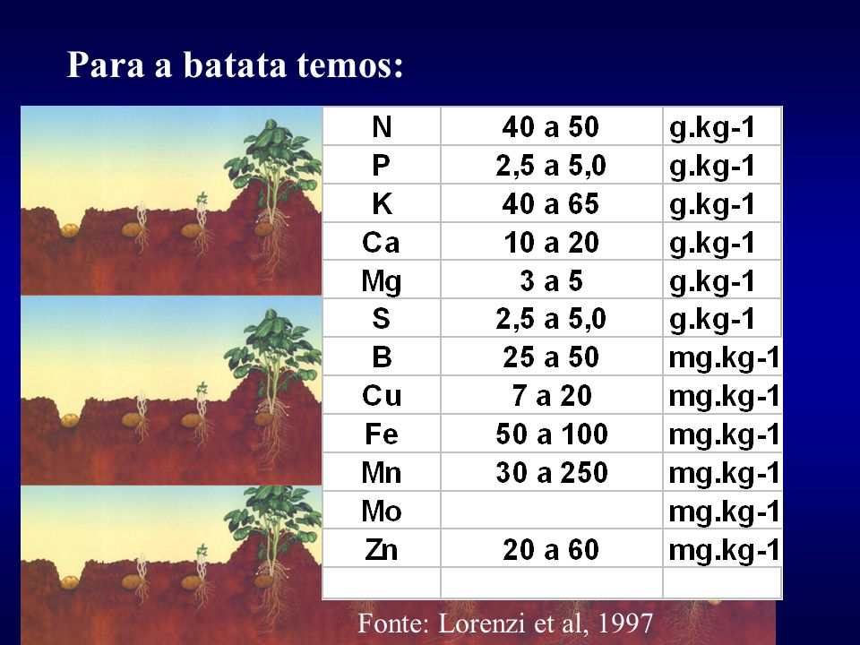 Para a batata temos: Fonte: Lorenzi et al, 1997
