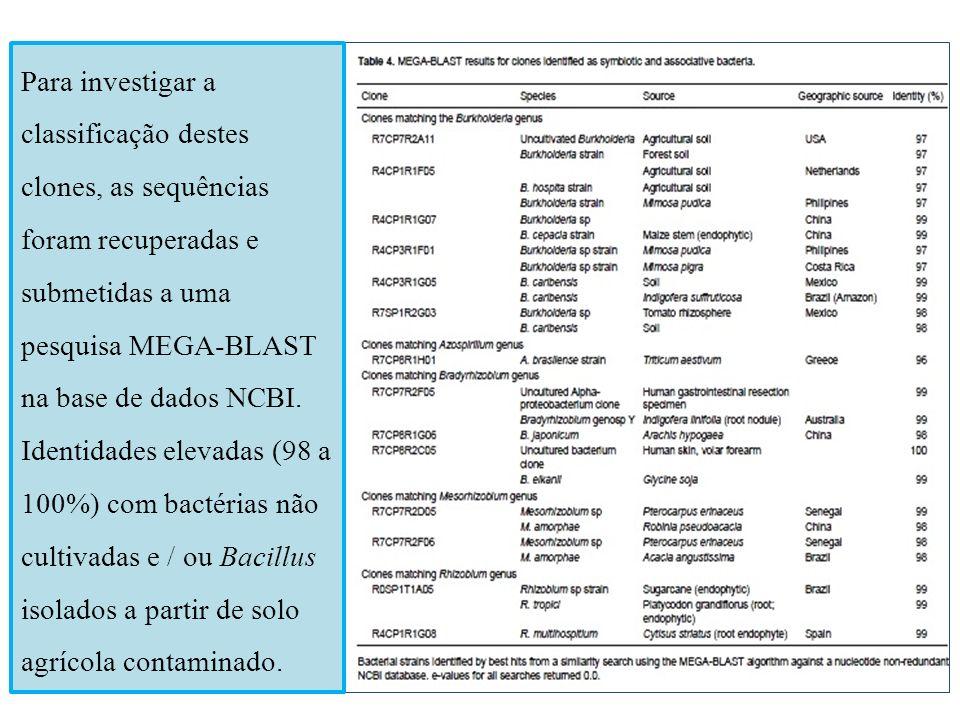 Para investigar a classificação destes clones, as sequências foram recuperadas e submetidas a uma pesquisa MEGA-BLAST na base de dados NCBI.