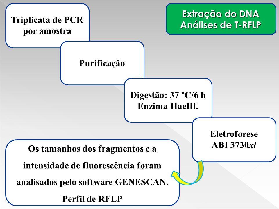 Triplicata de PCR por amostra Extração do DNA Análises de T-RFLP