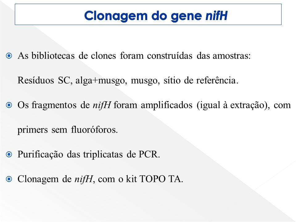 Clonagem do gene nifH As bibliotecas de clones foram construídas das amostras: Resíduos SC, alga+musgo, musgo, sítio de referência.