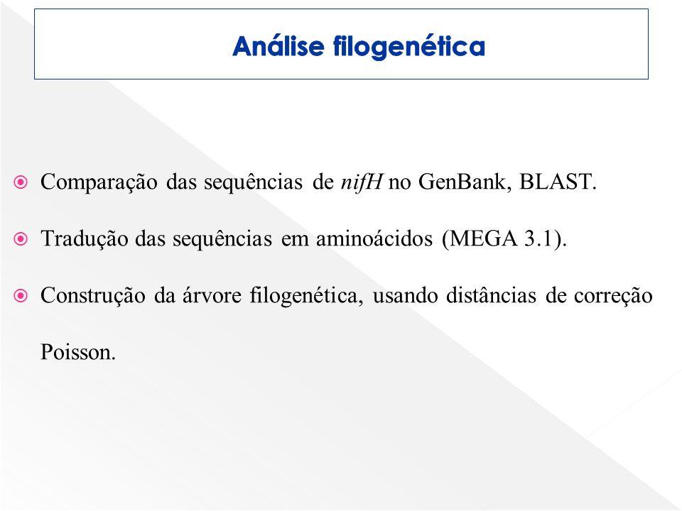 Análise filogenética Comparação das sequências de nifH no GenBank, BLAST. Tradução das sequências em aminoácidos (MEGA 3.1).
