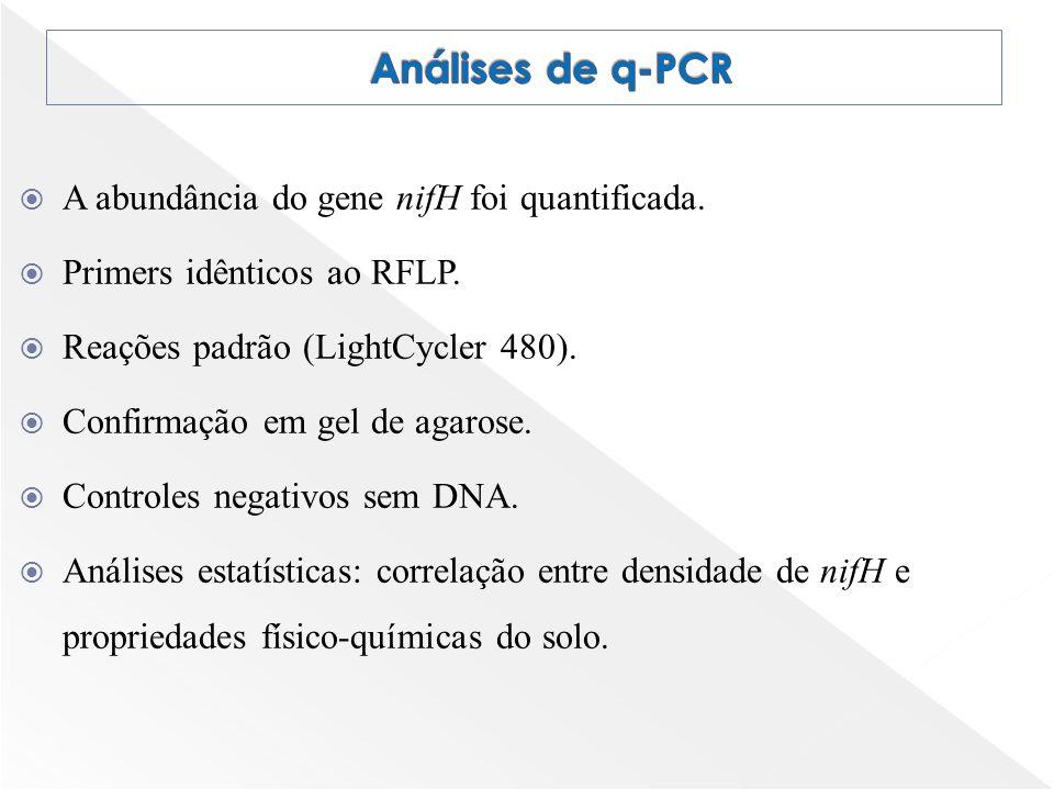 Análises de q-PCR A abundância do gene nifH foi quantificada.