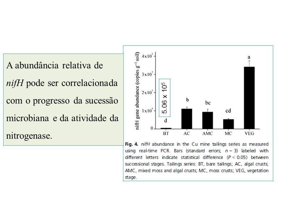 A abundância relativa de nifH pode ser correlacionada com o progresso da sucessão microbiana e da atividade da nitrogenase.