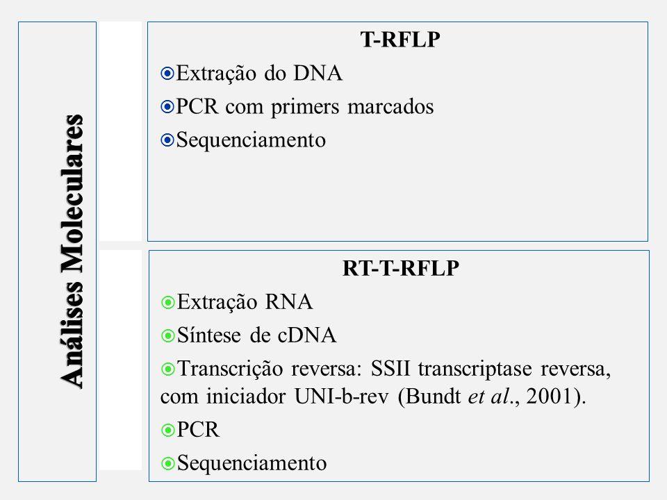 Análises Moleculares T-RFLP Extração do DNA PCR com primers marcados