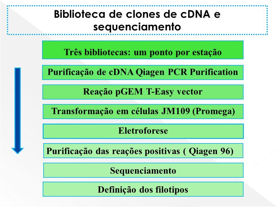Biblioteca de clones de cDNA e sequenciamento