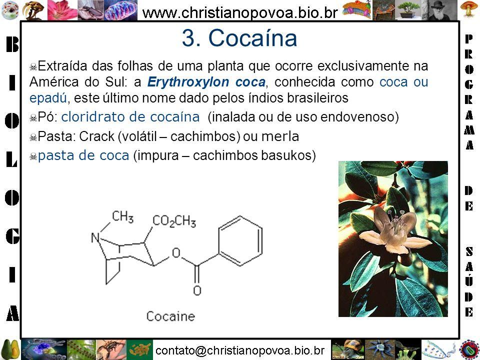 3. Cocaína
