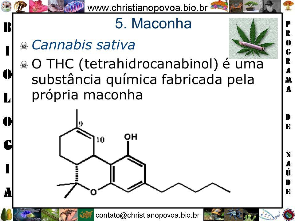 5. Maconha Cannabis sativa