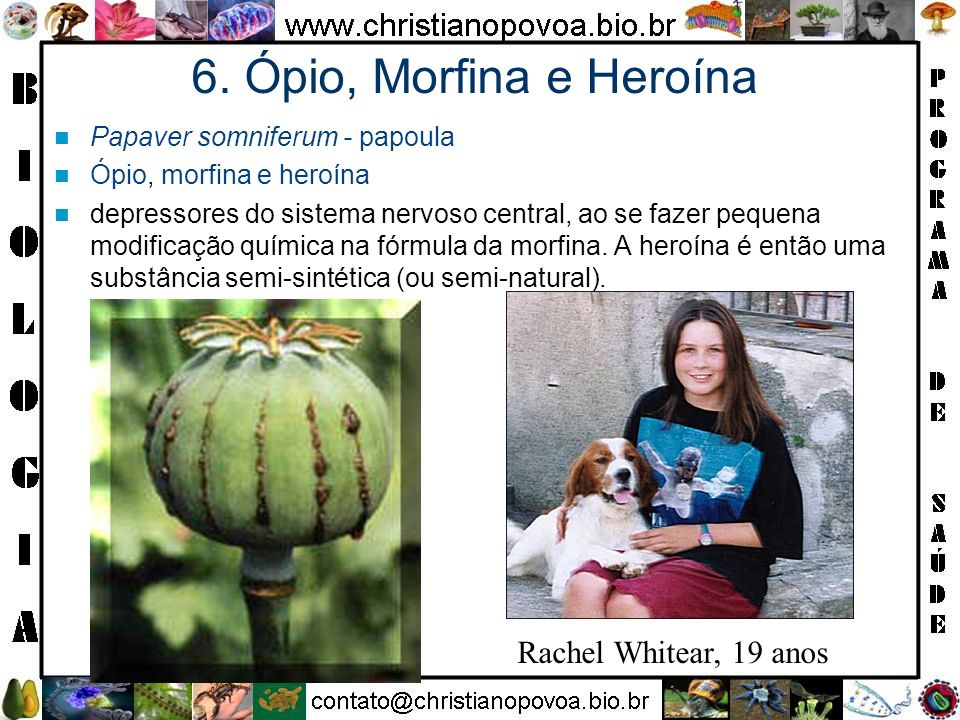 6. Ópio, Morfina e Heroína Rachel Whitear, 19 anos