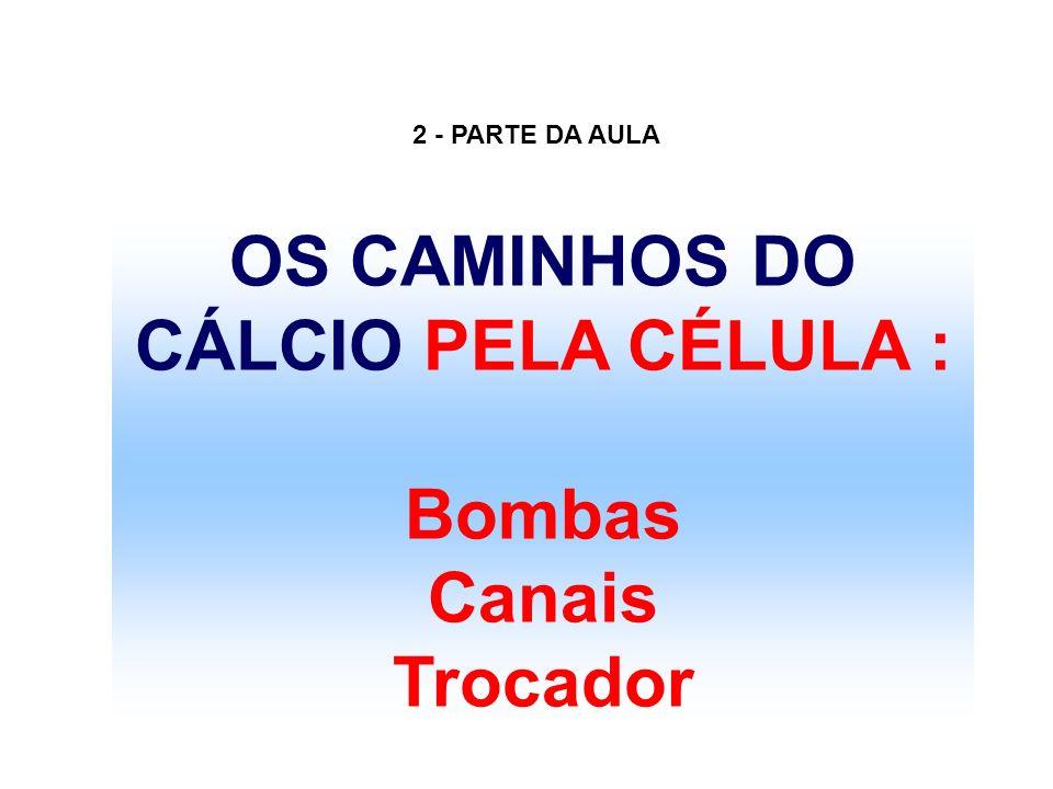 OS CAMINHOS DO CÁLCIO PELA CÉLULA :