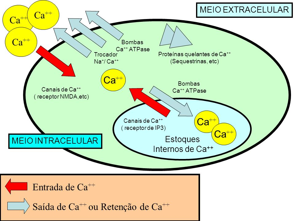 Proteínas quelantes de Ca++