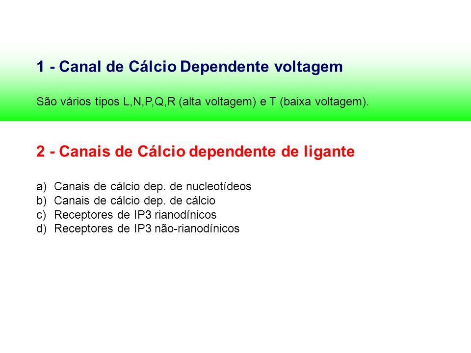 1 - Canal de Cálcio Dependente voltagem
