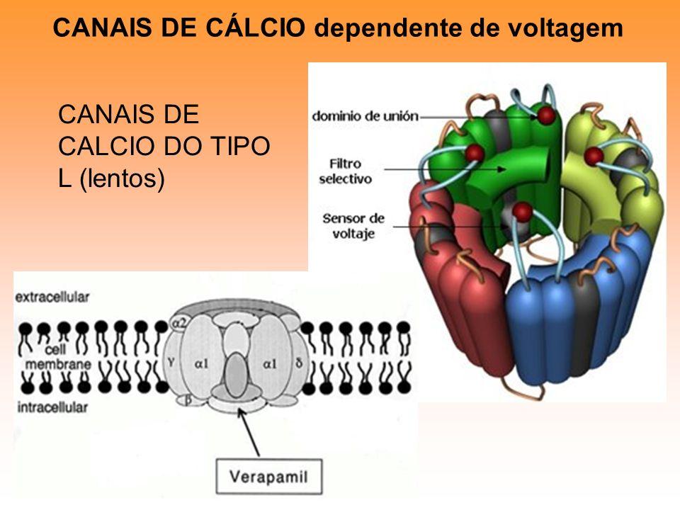 CANAIS DE CÁLCIO dependente de voltagem