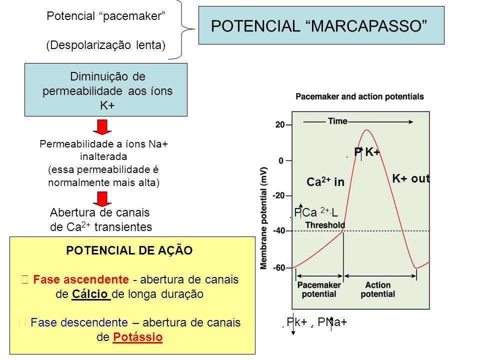 POTENCIAL MARCAPASSO