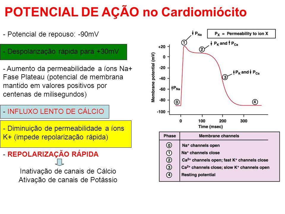 POTENCIAL DE AÇÃO no Cardiomiócito