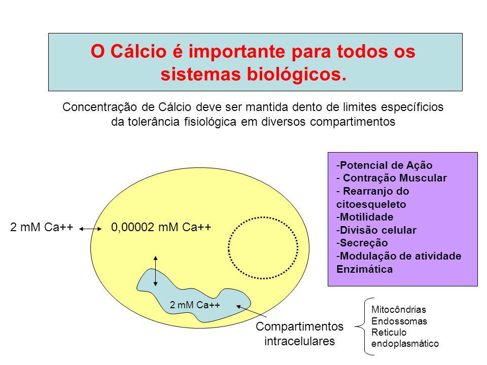 O Cálcio é importante para todos os sistemas biológicos.