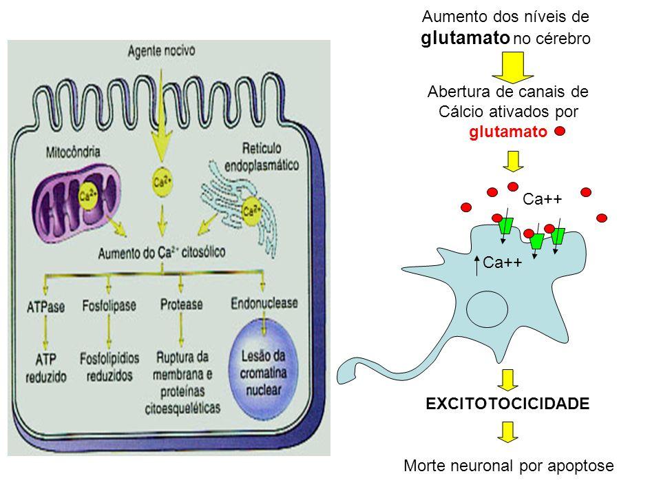 Aumento dos níveis de glutamato no cérebro